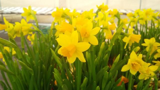 State College Pa Spring Flowers Remain Easter Season Tradition In