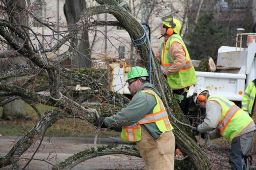 Tree Removal to Tie Up College Avenue on Saturday