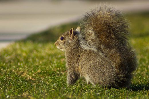 Minds and Matters: Research at Penn State Looks at Ultra-Cool Stars and Rampaging Squirrels