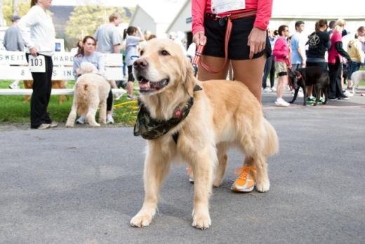 Get Your Sneakers: the 'Dog Jog' set for April 27