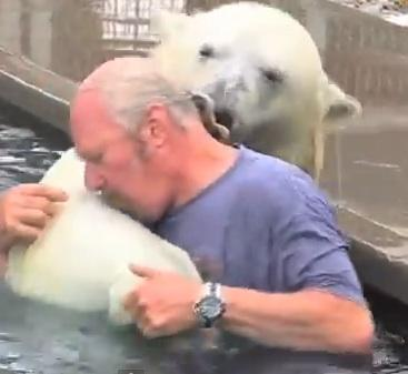 Viral Videos: Polar Bear Swim- With a Real Bear!