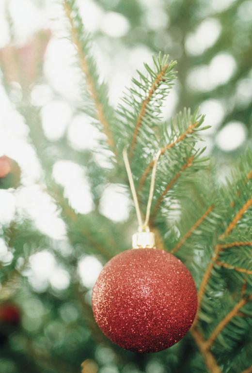 Christmas Tree Collection to Begin in January for State College Area for Recycling