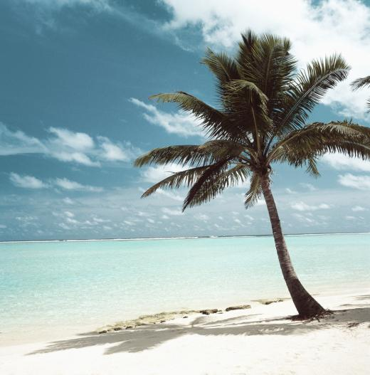 Light Therapy, Bring Florida to Your Home this Winter