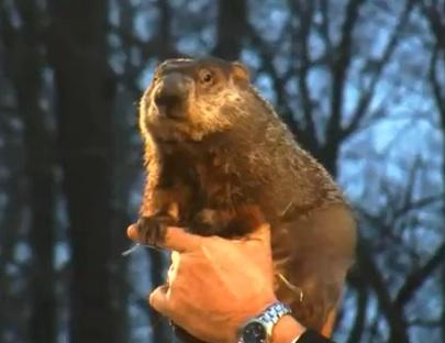Punxsutawney Phil Set for Groundhog Day