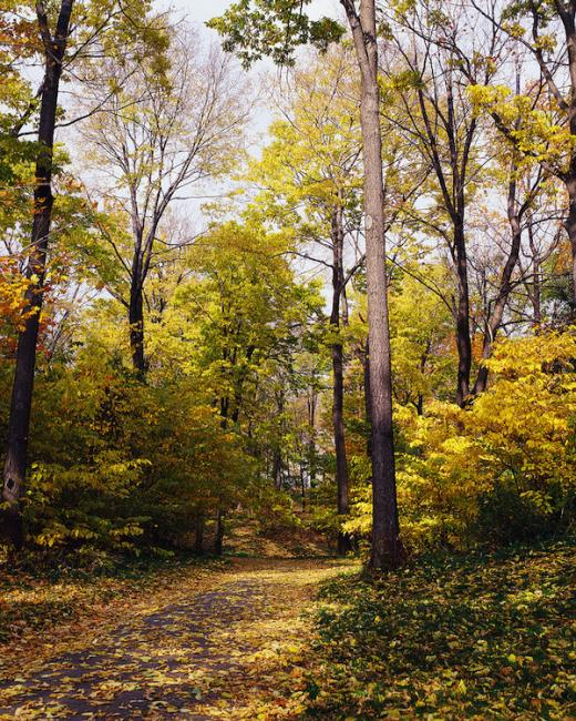 'Woods in Your Backyard' workshop set for March 8