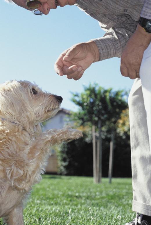 Seniors and Pets: A Wonderful Combination