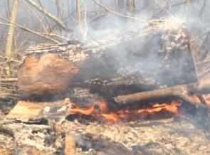 Controlled Burn Creates Smoky Skies Over State College
