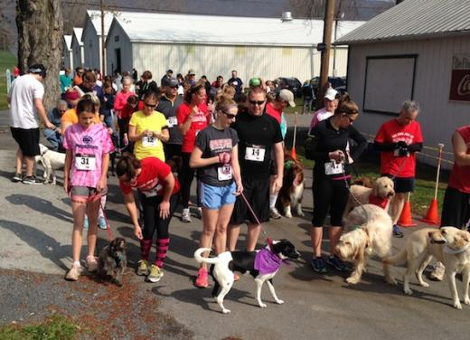Dog Jog Draws People and Their Pets for Shelter Fundraiser