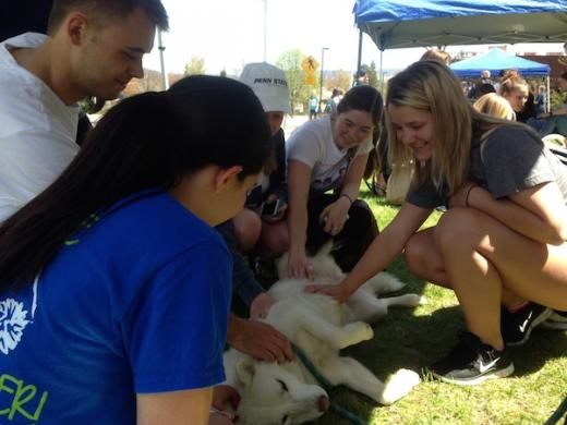 Canine Stress Busters Help Students Ease Tension During Finals Week