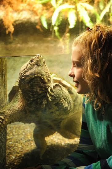 Summer Day Getaway: Explore Exotic Critters at the Reptiland