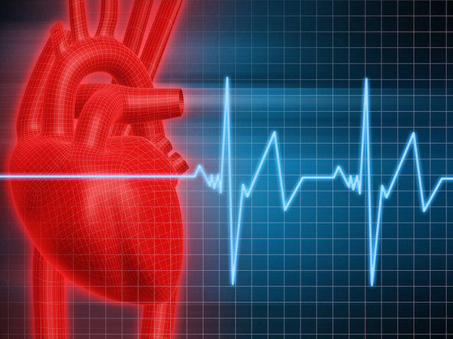 To Your Health: Understanding How Your Heart Rate Impacts Fitness and Heart Health