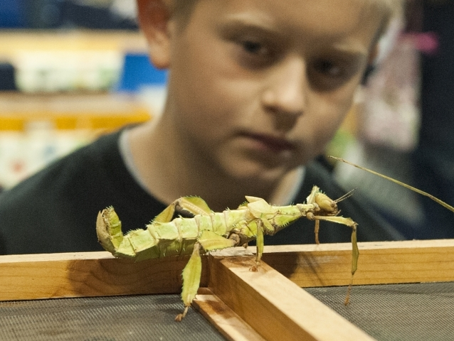 The Great Insect Fair Returns to Ag Arena