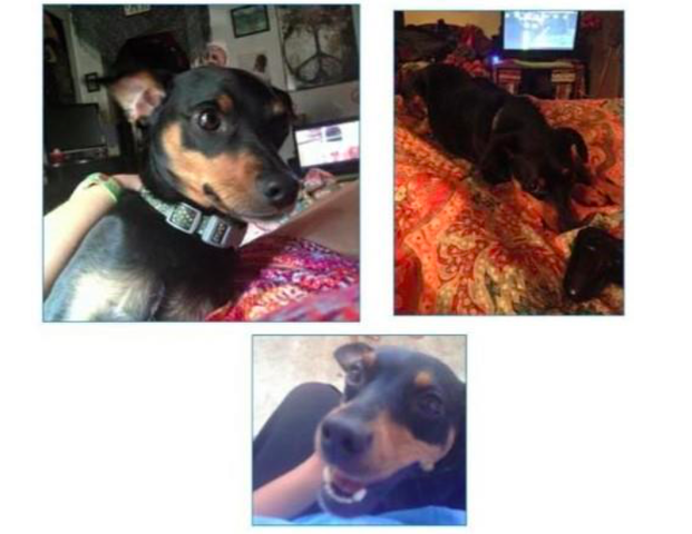 Police Say Dog Stolen from Lemont Home