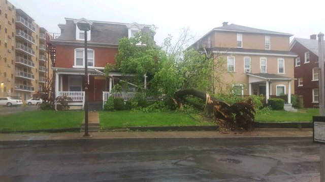 Storm Causes Power Outages, Downed Trees