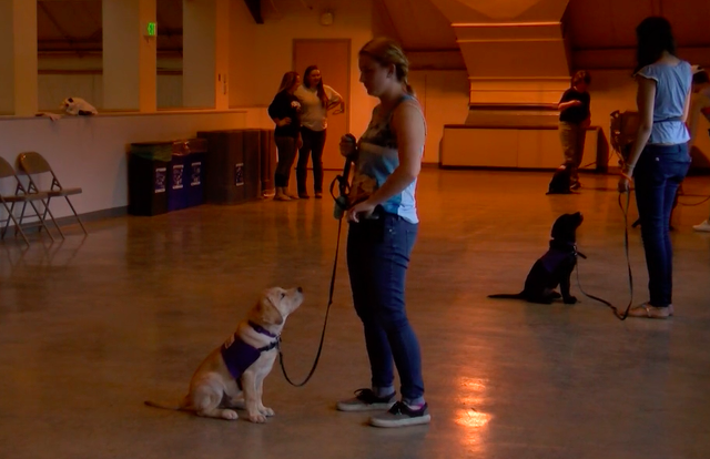 Roar for More at Penn State Raises Puppies to Be Service Dogs