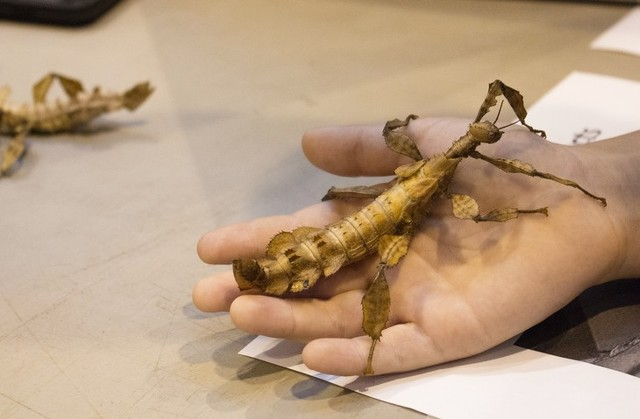 Penn State's Great Insect Fair Returns with a View of the 'Unseen'