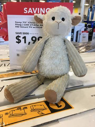 Thousands Hope to Reunite 'Lambchop' with Its Owner