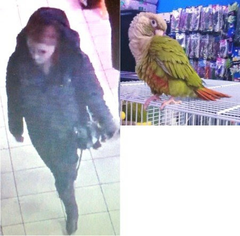 Police Seek Suspect in Bird Theft