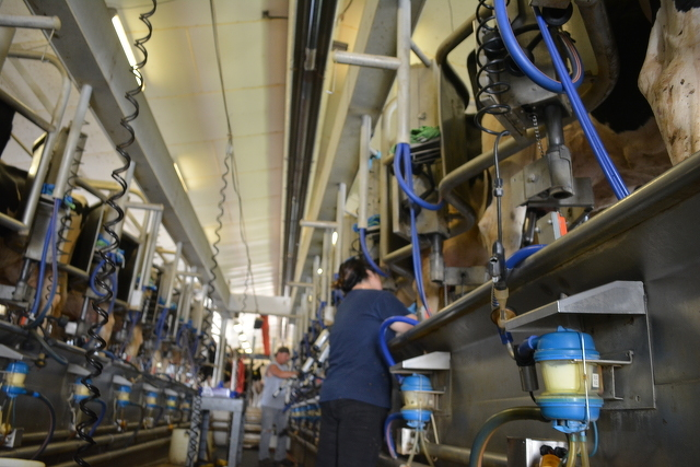 State, County Looking at Ways to Support Dairy Farmers