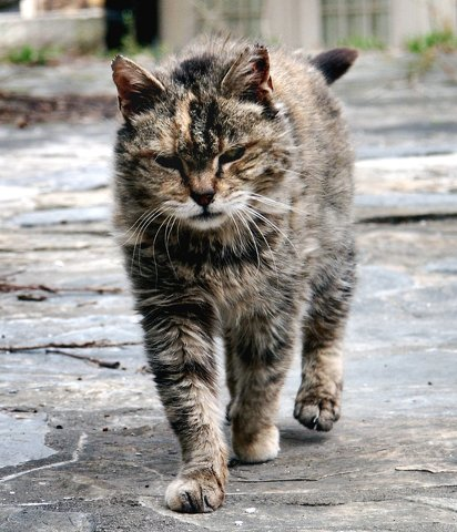 Bellefonte Dealing with Feral Cats
