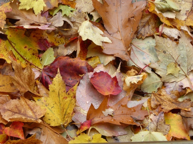 State College Extends Fall Leaf Collection Again