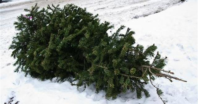 Christmas Tree Recycling Dates Scheduled for Centre Region