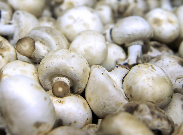 Science on Tap Explores Mushrooms, Their Genes and Our Health
