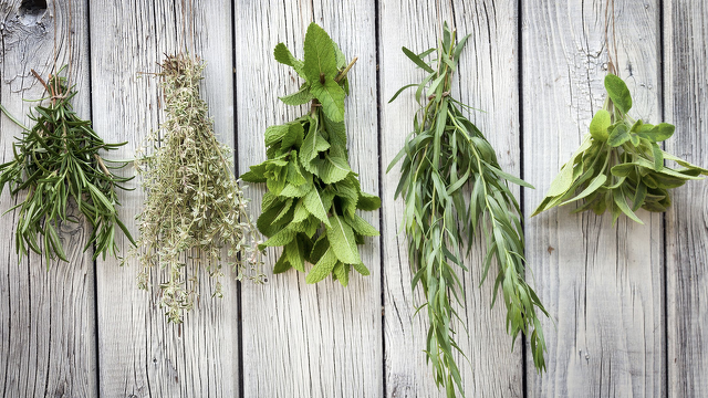 Avid Gardner: Tips for Growing Herbs in Containers
