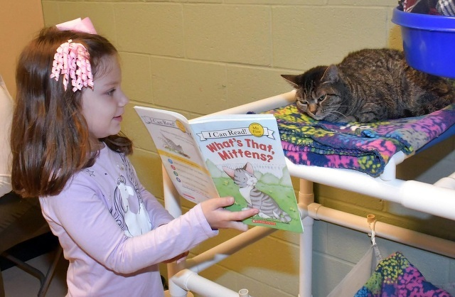 Centre County PAWS Reading Program Is a 'Win-Win' for Youngsters and Their Feline Shelter Friends