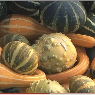 VIDEO: State College Farmers' Markets Boost Local Economy