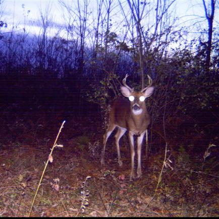 The History of Deer Management in Pennsylvania