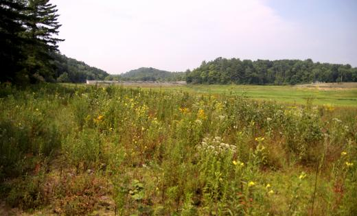 Penn State: Stone Valley Lake Repairs May Begin by Spring