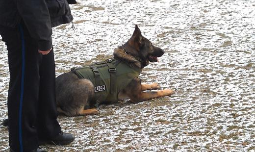 State College Police Dog Outfitted with Safety Vest, Thanks to Community Groups
