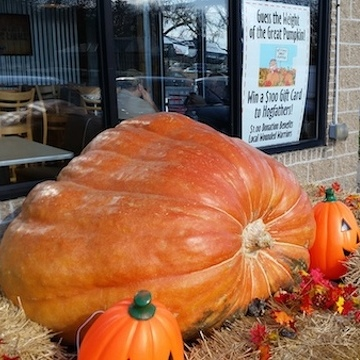 'Great' Pumpkin Contest to Benefit Wounded Warriors