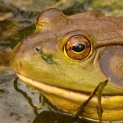 Will We Notice Boiling Frog Before We Croak?