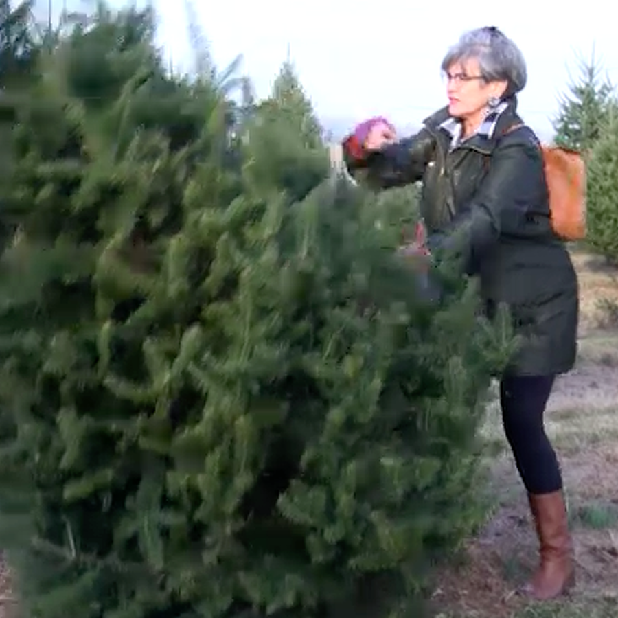 VIDEO: Sprucing Up the Holiday