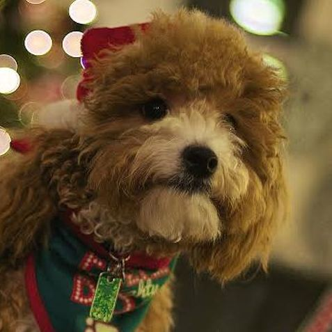The Best (and Cutest) of State College's Christmas Pets