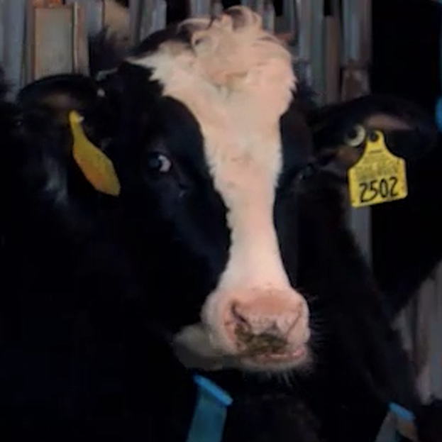 VIDEO: Pennsylvania's 'Got Milk'