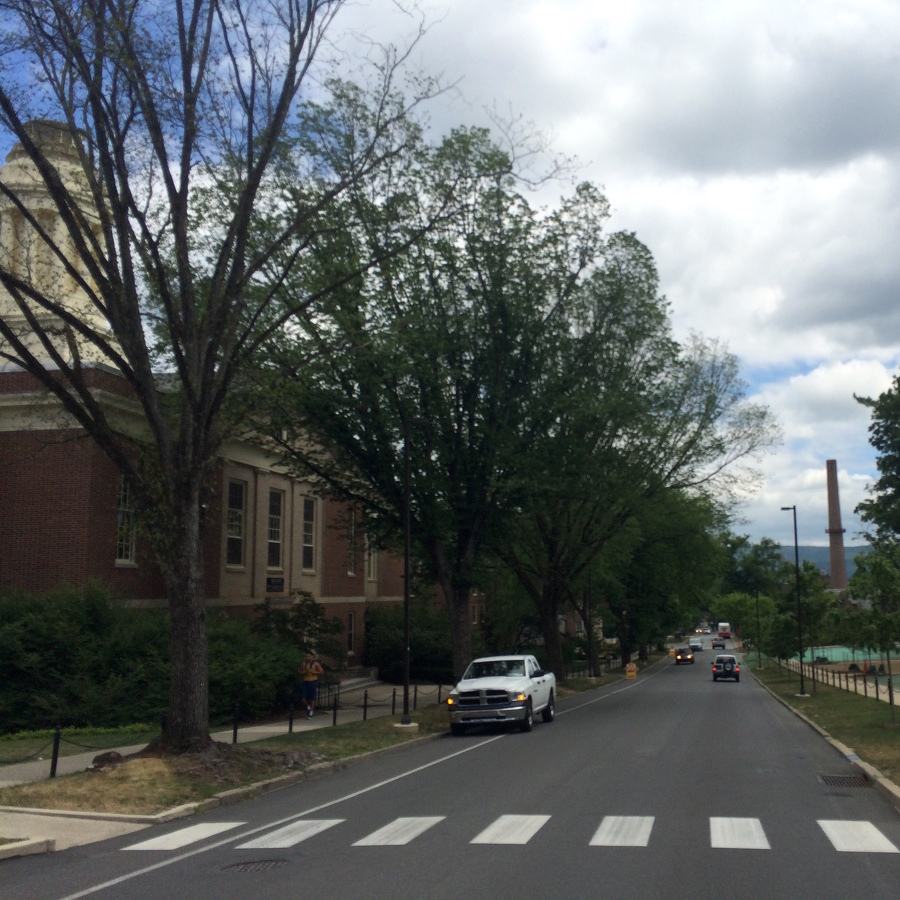 University Park Losing More Elms to Disease