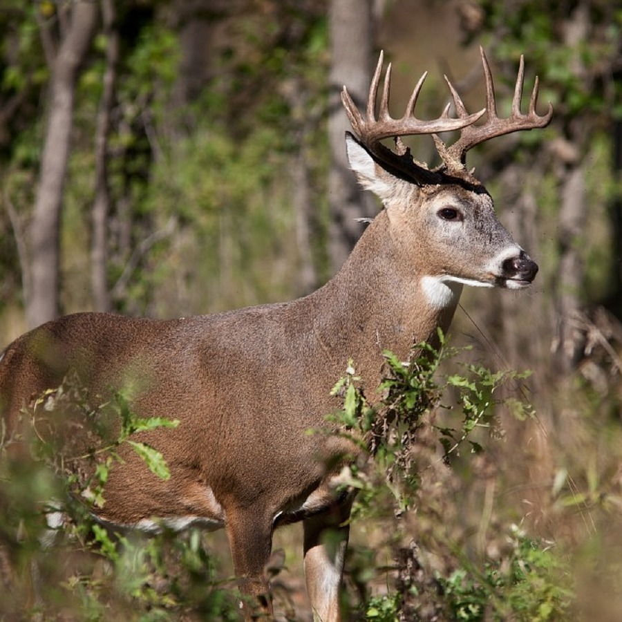 Oh Deer: The Fascinating Facts Behind Pennsylvania Hunting