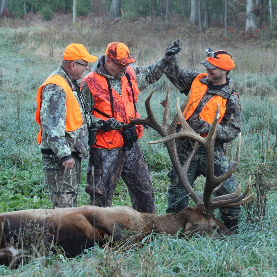 Writer offered a ringside seat for Pennsylvania's elk hunts