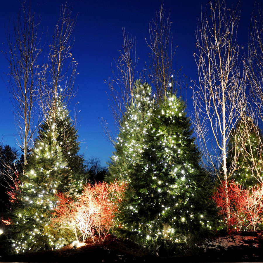Arboretum to Mark the Holiday Season with Annual Winter Celebration