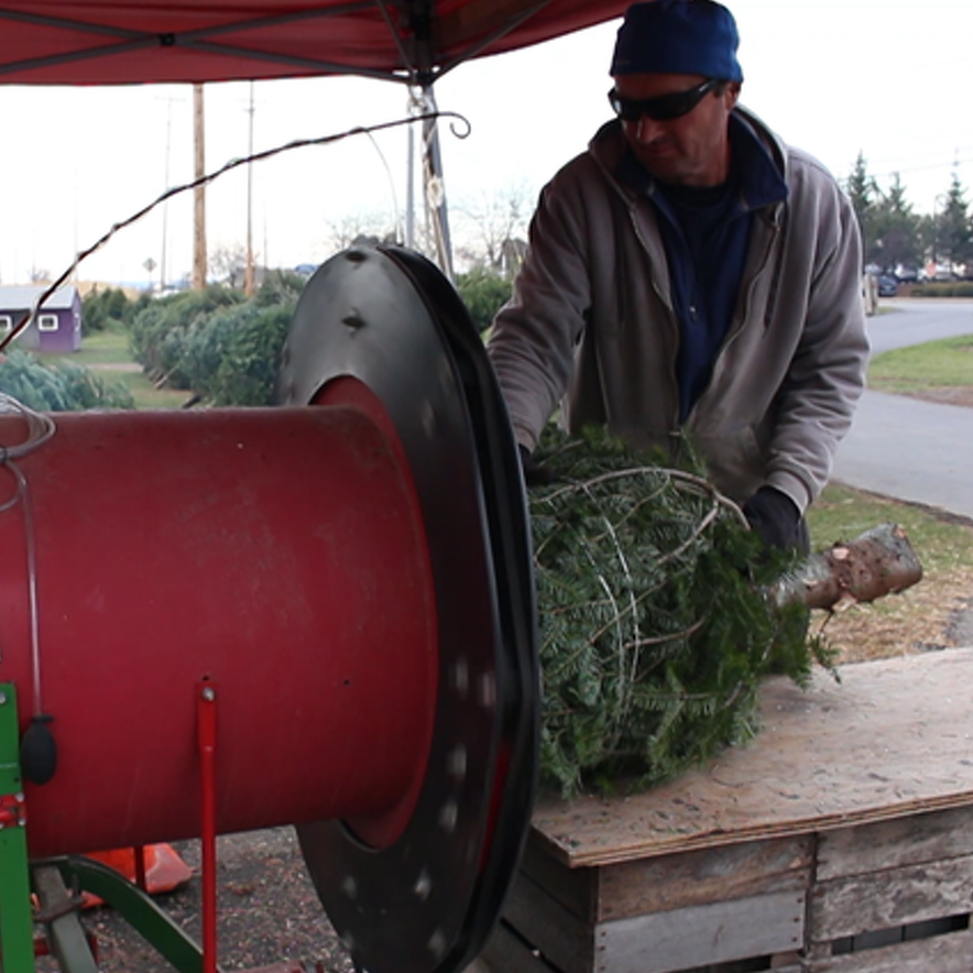 'Tis the Season for Local Christmas Tree Farms