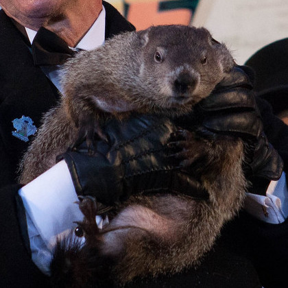 Punxsutawney Phil to Visit Cafe 210 West