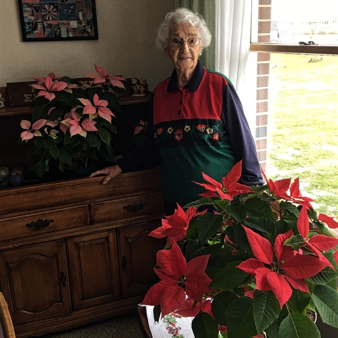 The Avid Gardener: Extend the lives of holiday plants