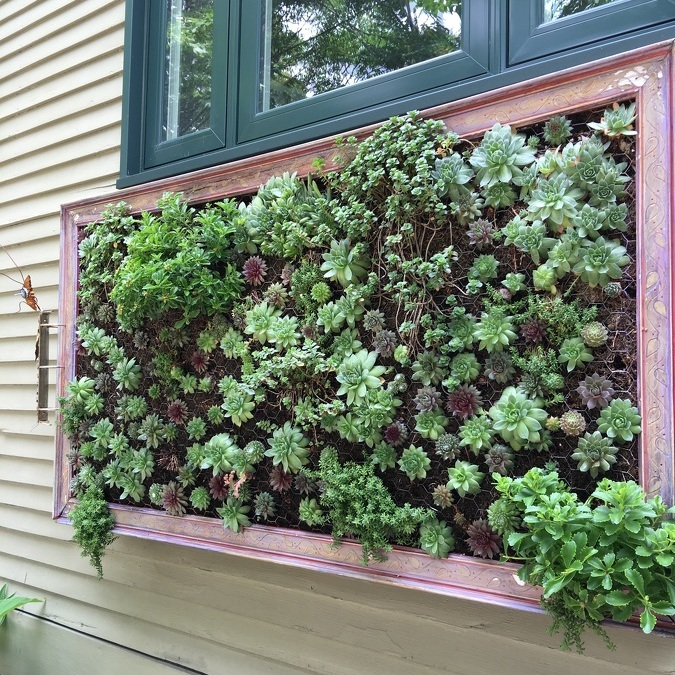 The Avid Gardener: Succulents are trendy this year