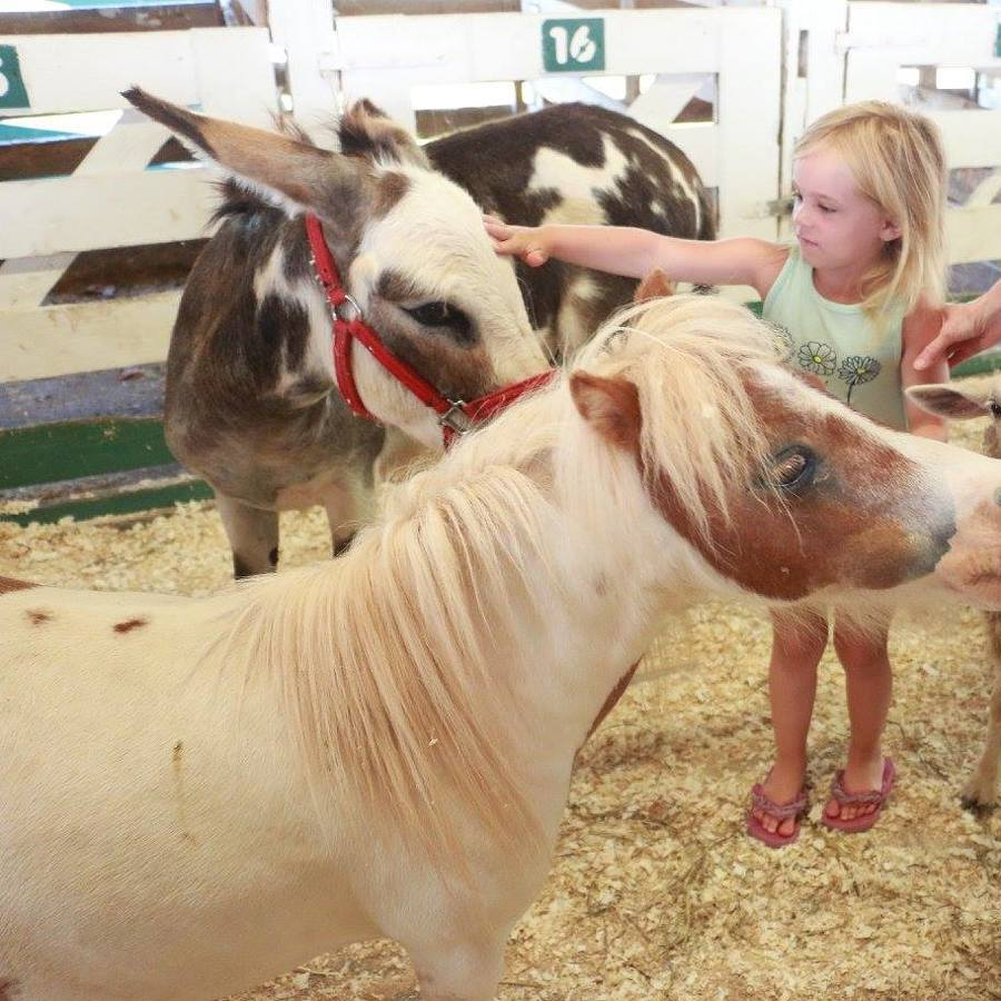 FarmFest Celebrates Organic Agriculture with Two Days of Fun, Education