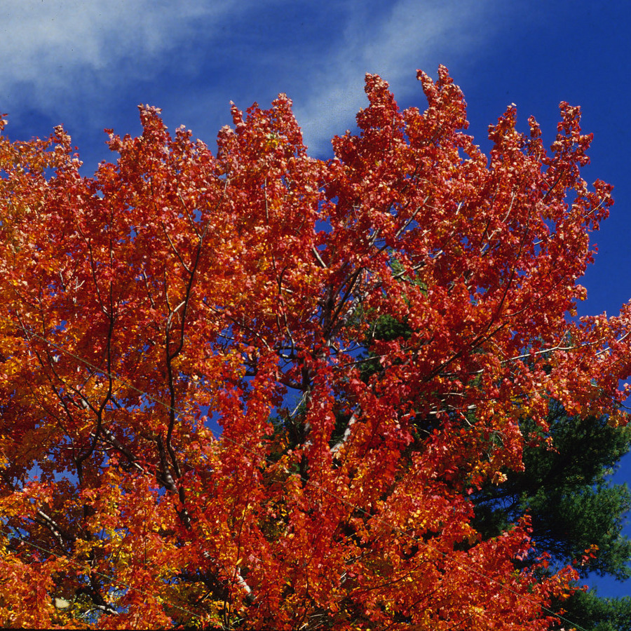 Pennsylvania Fall Foliage Outlook Is Bright, Experts Say