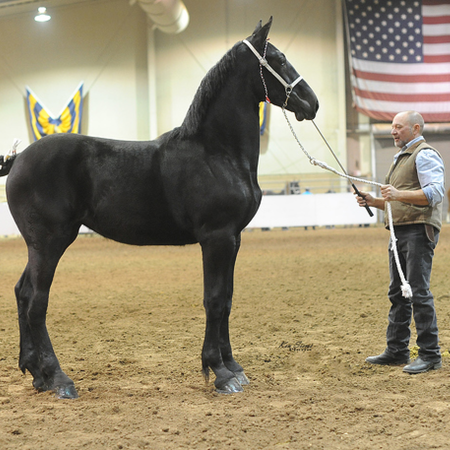 Penns Valley Horses Take Top Spots at Pennsylvania Farm Show