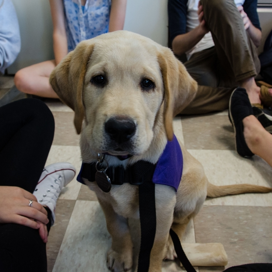 'Science on Tap' to Discuss Animal Psychology, Canine Therapists